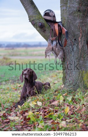 A young, pure blooded dog is lying in the lawn near the tree. On a branch hangs a weapon, a hat with a feather, a prsy is hanging on the lace. A hunting scene. #1049786213