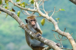 A young scratching his chin while relax by sitting on the tree branches with blue-green background in Sri Lanka.