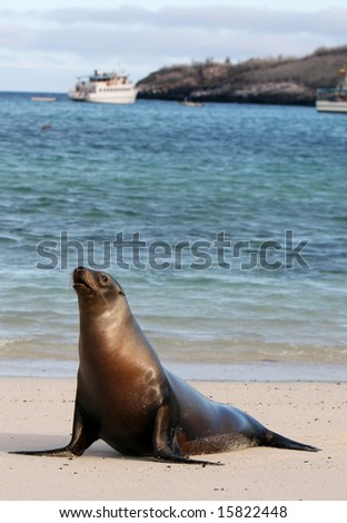 A young Sea Lion rests on the warm sands of Santa Fe island, Ecuador