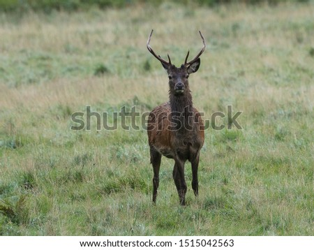 A young stag seen just after heavy rain #1515042563