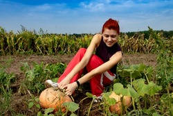 a young woman is diligently picking a pumpkin. Picking pumpkin in the field