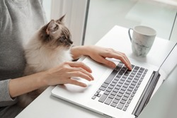 A young woman is working on a laptop at home near the window and her cat is sitting on her lap