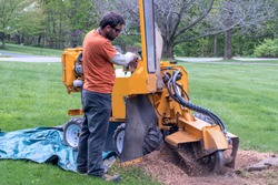 A young worker operates a large stump grinder, pulverizing a tree stump