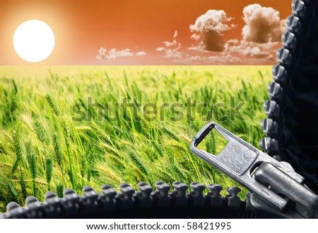 a Zipper opening up a beautiful view of sunrise over a green wheat field