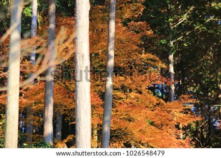 a Zuiganzan Enkouji Temple at Sakyo Ku - Shutterstock ID 1026548479