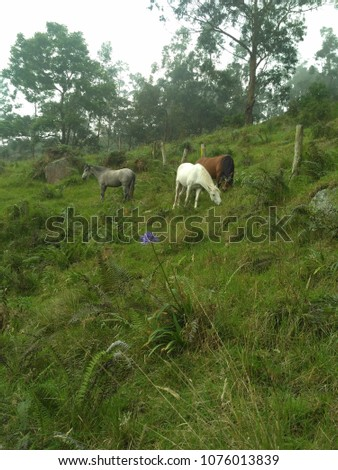 Stock Photo Aazing blue-gray horse; white horse in the fog; horses among wild nature; beautiful horses background