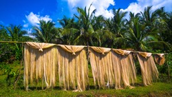 Abaca fiber, known as Manila Hemp, drying in an island village - Philippines