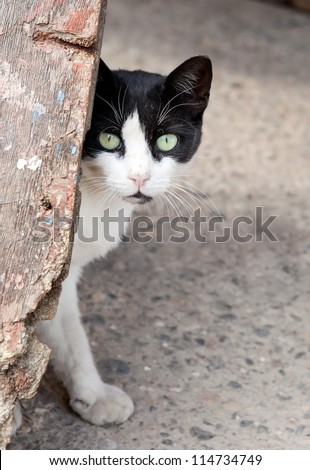 aback stray cat