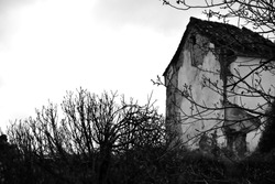 Abandoned and dilapidated house among trees in black and white