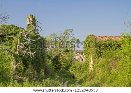 Abandoned and fallen houses idyllically overgrown with plants characterize the idyllic landscape #1252940533