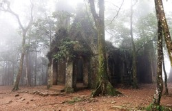 abandoned and partially ruined church covered by plants in the misty woods