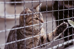 Abandoned cat behind the fence in animal shelter. Pet adoption. Playful tabby cat.