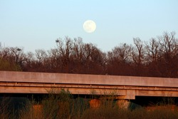 Abandoned concrete road bridge rising above dense trees without leaves at local forest with clearly visible large full Moon above on clear sky background at sunset on warm spring day