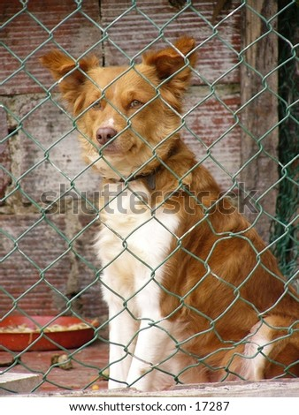 Abandoned dog at dogs home