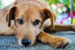 abandoned dog, desolated alone and tired dog