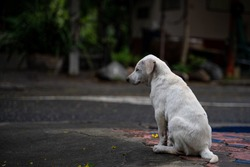 Abandoned dog on the road, stray dog, Puppy, dirty, homeless Dog adopt, street, leave, sad emotions, outside, lonely, advertising, Adoption, copy space, Thailand.