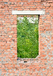 abandoned empty window with green leafs in sunny day, Chernobyl zone diversity