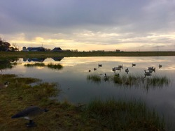 Abandoned Farm Pond