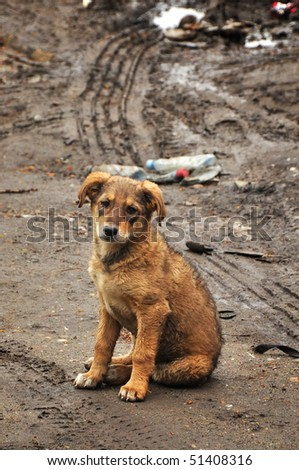Abandoned, frightened young dog, left alone at the street.
