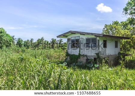 Abandoned haunted house in sedge with full of grass in Thailand