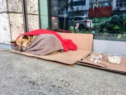 Abandoned homeless stray dog sleeping on pavement in peace under blankets snowy cold winter