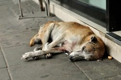 Abandoned homeless stray dog sleeping on the street