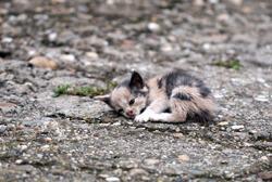 abandoned kitten lying on the ground