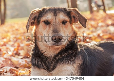 Abandoned lonely dog in autumn park  #347049404