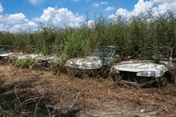 Abandoned old cars for long times.