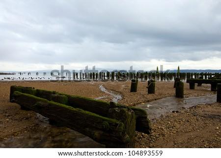 Abandoned old wood logs for an ocean pier long forgotten.