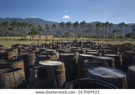 Abandoned old wooden rum barrels at a sugarcane plantation. Aragua, Venezuela.