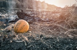 Abandoned rotten pumpkin left on the burnt field. Single moldy decaying pumpkin on burned soil. End of Halloween concept, close up.