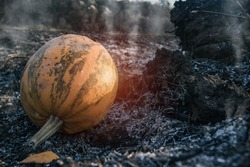 Abandoned rotten pumpkin left on the city dump. Moldy decaying pumpkin on burned soil, end of Halloween concept. Ground view, close up.