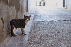 Abandoned stray cat looking directly at the camera, on a street in a town in Spain