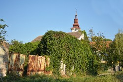 Abandoned village house covered with green wild vine, summer sunny day.