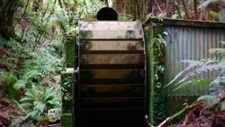 Abandoned waterwheel engulfed in New Zealand native bush