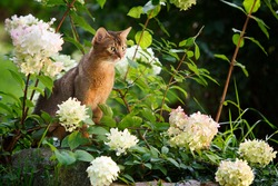 Abi cat in the flowers