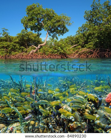 Above and below water surface with mangrove trees and a shoal of tropical fish with corals and sea sponges, Caribbean sea, Panama