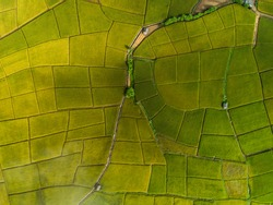 Above golden paddy field during harvest season. Beautiful field sown with agricultural crops and photographed from above. top view agricultural landscape areas the green and yellow rice fields.