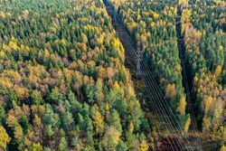 Above view of autumn colored forest with power lines
