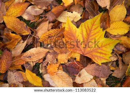 Above view of autumnal yellow leaves on the land