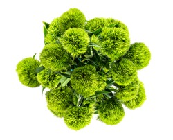 above view of bunch of flowers Dianthus barbatus green ball or green tick isolated on white background