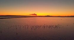 Above view salt lake in Santa Pola with flamingoes birds during sunset glowing sundown. Spain