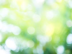 Absrtact: Natural green light background bokeh