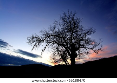 abstract alone tree in dusk time