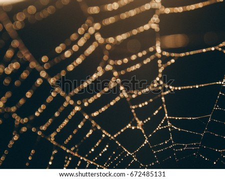 Abstract and Art Close up Cobweb with bokeh , Gold spider web with water drop on black background,spider web of lines that are crossed to a pattern,Circle drop on the line against the sun.
