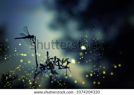 Abstract and magical image of dragonfly silhouette and Firefly flying in the night forest. Fairy tale concept
