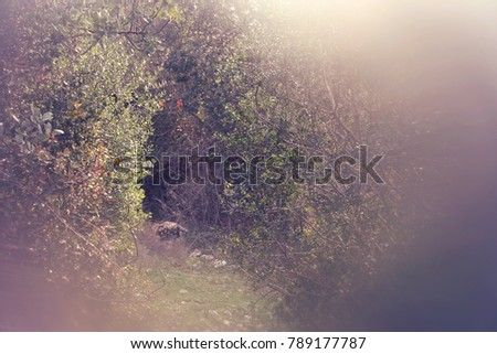 abstract and surreal autumnal dreamy image of forest