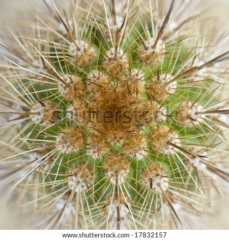 Abstract angle and photo of cactus