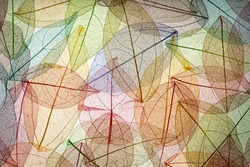 Abstract autumn background. Beautiful leaves texture